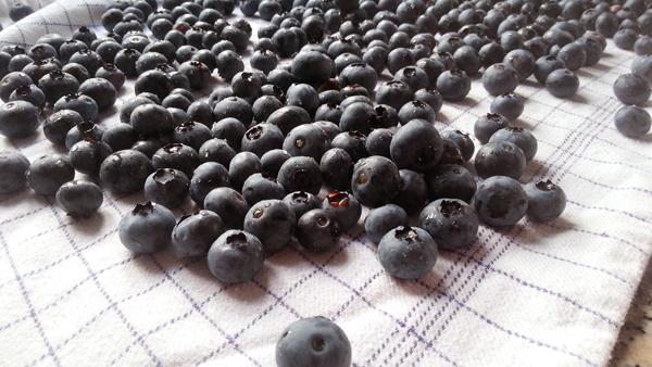 Pluk selv blåbær